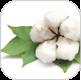 cotton-milk-img